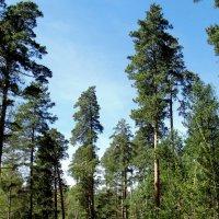 Лесной пейзаж . :: Мила Бовкун