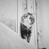 Любопытство :: Тамара Кузьмина