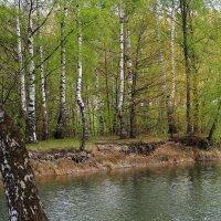 Робкая зелень холодного мая :: Татьяна Ломтева