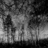 Темнеет :: Tanja Gerster