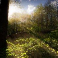 Солнце с нами :: E.V.Geniy .