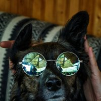 Dog Lennon :: Евгений