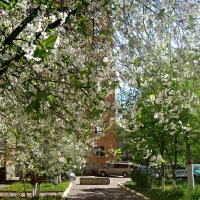 Весна идет,весне дорогу.. :: Елена Семигина