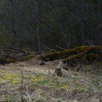 Старое дерево :: Таня Бакулина