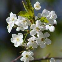 Сады цветут :: lady-viola2014 -