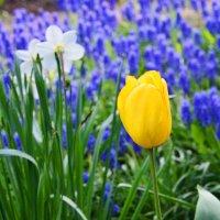 Городские цветы (2) :: Полина Потапова