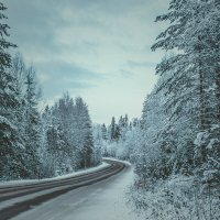 Дорога в зиму :: Маргарита Си