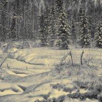 зимний лес... :: Владимир Матва