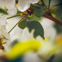 весна :: ИрЭн Орлова