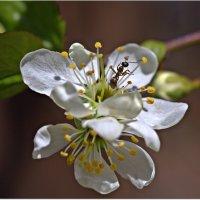 Весна и муравей :: Вячеслав Минаев