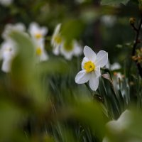 весна в разгаре :: Александр Солуянов