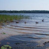 На озере. :: владимир