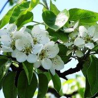 Майское цветение :: Маргарита Батырева