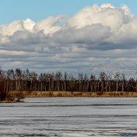 Птичья стая :: Valerii Ivanov