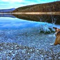 Игры на озере :: Любовь