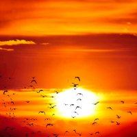 Волновались птицы на закате... :: Анатолий Клепешнёв