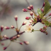 Весна :: Анна Миронова