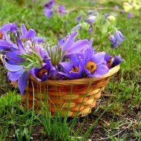 Я собрала весну в корзинку. :: nadyasilyuk Вознюк