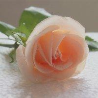 В обыкновенном  красоту ищите,любите каждый листик, лепесток. :: Людмила Богданова (Скачко)