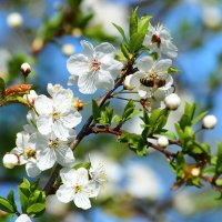 Весеннее цветение. :: Paparazzi