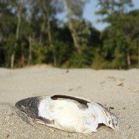 Кубанский песок :: Дина Дробина