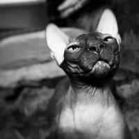 Мой кот. :: Марина Влади-на