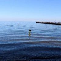 Мужчина в море :: Татьяна Пальчикова