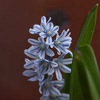 цветы весны :: gribushko грибушко Николай