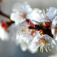 Весна идет! :: Людмила