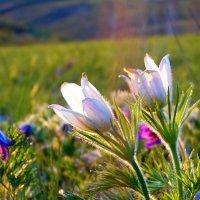Нежность весны. :: nadyasilyuk Вознюк