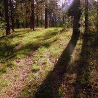 В лесу полдень . :: Мила Бовкун