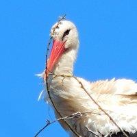 весенний портрет :: linnud