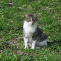 Кошка :: Дмитрий Никитин