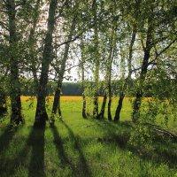Солнечный день :: Victor Klyuchev