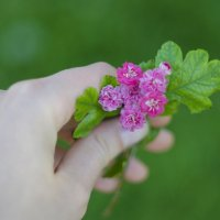 Тот же неизвестный цветок :: Наталья Узунова