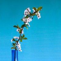 Натюрморт с цветущей вишней :: Irina-77 Владимировна