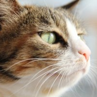 Лето манит запахами и пением птиц...Кошка Буся. :: Ирина Горовик