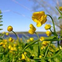 весенние  цветы :: Валентина. .