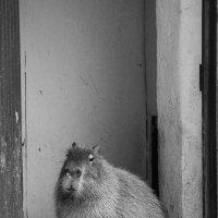 Московский зоопарк :: Юлия Манчева
