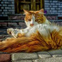 ... ну и просто красавец.... :: Александр Бойко