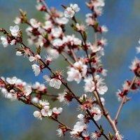 Весна в разгаре! :: Paparazzi