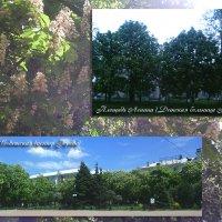 В Луганске цветут каштаны :: Наталья (ShadeNataly) Мельник