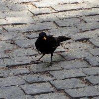 Черный ворон :: Наталья Джикидзе (Берёзина)