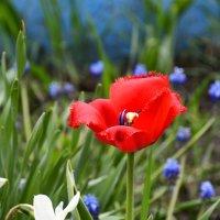 Цветы с саду... :: Дмитрий Петренко