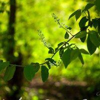 Цветение природы :: Анна Кокарева