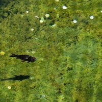 приплыла к нему рыбка, спросила... :: Александр Корчемный