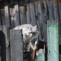 ОСТОРОЖНО! ВО ДВОРЕ ДОБРЫЙ КОТ! :: Юрий Вовк