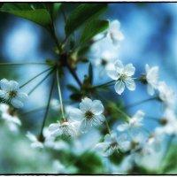 Первые цветы :: Leo Alex Photographer