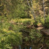 лесной ручей... :: Владимир Матва