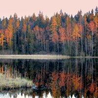 Вечер на озере. :: Валентина Жукова